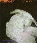Врубель М.А. Лебедь. 1901. Холст, масло. 154х131. ГТГ
