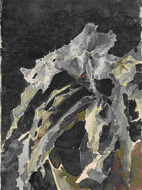 Орхидея (1886 - 1887)