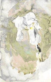 Белый ирис (1886-1887)