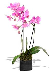 Фотография орхидеи
